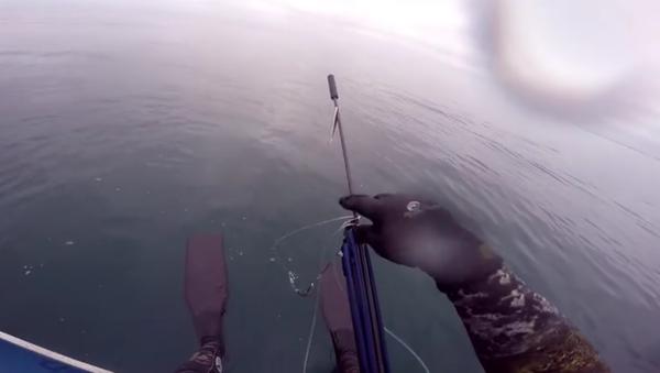 Attack of Great White Shark. - Sputnik International