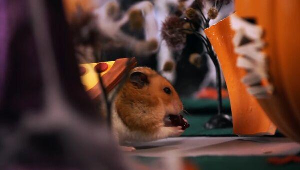 Tiny Hamster's Halloween - Sputnik International