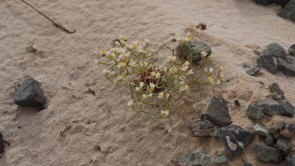 Togrogiin Shiree is an escarpment in the Gobi with an abundance of fossils. - Sputnik International