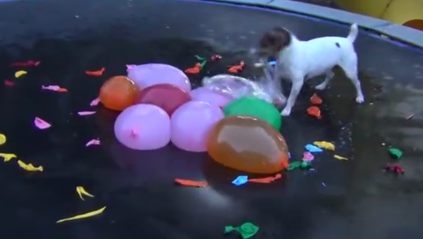 Spaz Attacks Water Balloons--Full Version - Sputnik International