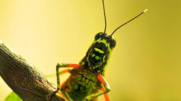 Grasshopper - Sputnik International
