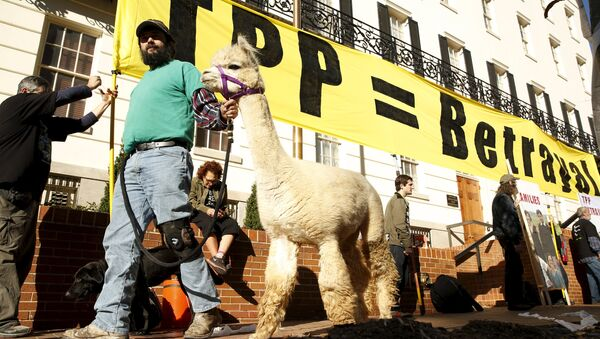 Farm activist Ethan Abbott walks with his alpaca during a protest of the TPP (Trans-Pacific Partnership) held outside the Office of the U.S. Trade Representative in Washington, November 16, 2015 - Sputnik International