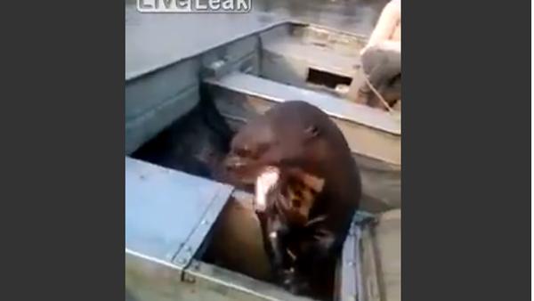 Huge otter jump in the boat for a free meal - Sputnik International