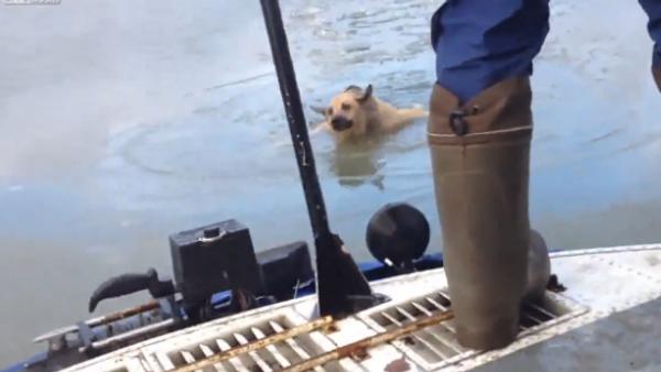 Dog Rescue... - Sputnik International