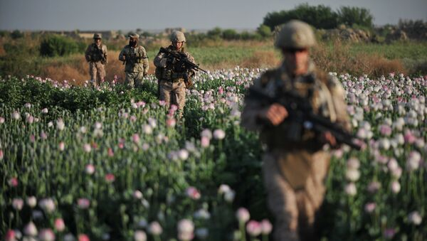 US Marines and Gunnary Sergeant Nate Cosby (R), Staff Sergeant Josh Lacey (2nd R) and Navy Hospitalman 2 Daniel Holmberg (L) from Border Adviser Team (BAT) and Explosive Ordance Disposal (EOD) 1st and 2nd Marine Division (Forward) walk through opium poppy field at Maranjan village in Helmand province on April 25, 2011 as they take patrol with their team and Afghanistan National Police - Sputnik International