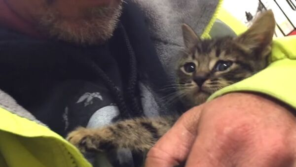 Kitten Trapped in Storm Drain Rescued after 33 Hours! - Sputnik International
