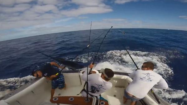 Huge marlin nearly impales fisherman - Sputnik International