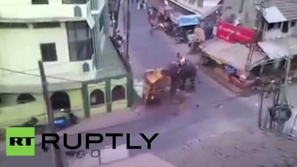 Elephant rampages through Indian town - Sputnik International