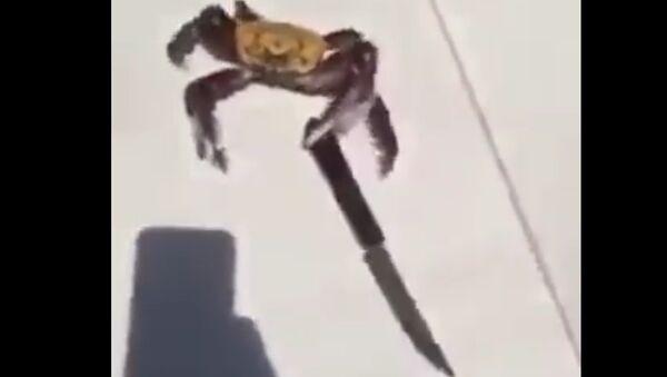 New Deadly Crab found in Brazil - Sputnik International