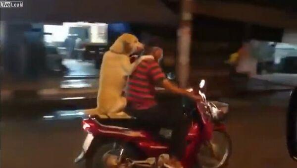 Dog Rides on the Back of the Scooter - Sputnik International
