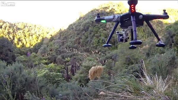 Drone shot down while filming - Sputnik International