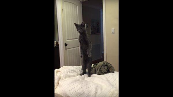 Standing curious cat.. - Sputnik International