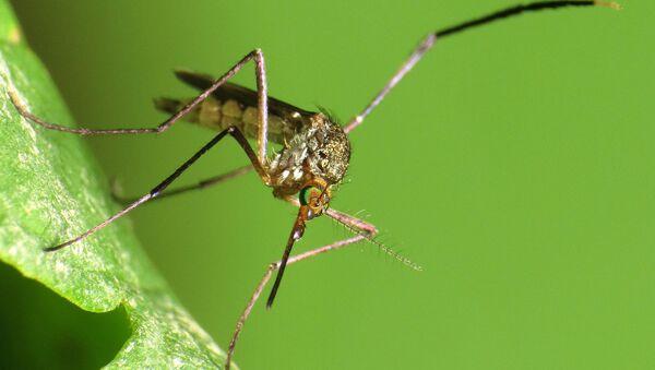 Does not transmit Zika virus! - Sputnik International