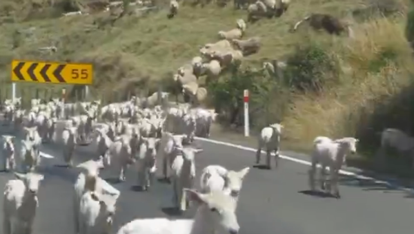 'This is wonderful, this is New Zealand' - LAMB-PEDE - Sputnik International