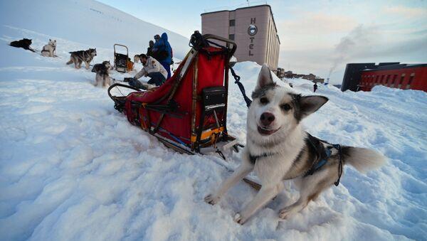 Husky sled dogs in the northernmost Russian village of Barentsburg on the Spitsbergen (Svalbard) archipelago - Sputnik International