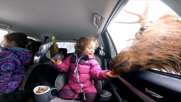 A girl feeds a caribou - Sputnik International