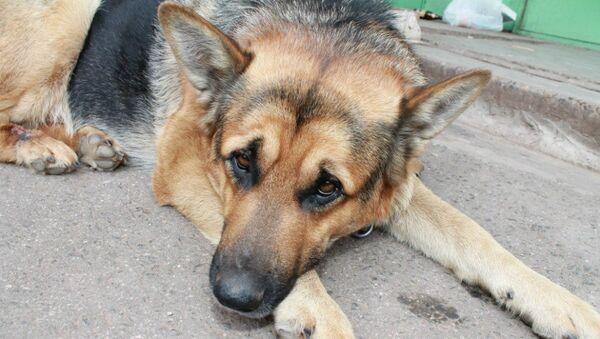 Dog Yan - Sputnik International
