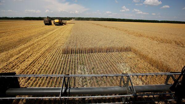 Harvesting wheat at the fields of the Lebyage-Chepiginskoe JSC in Timashevsky District, Krasnodar Territory - Sputnik International