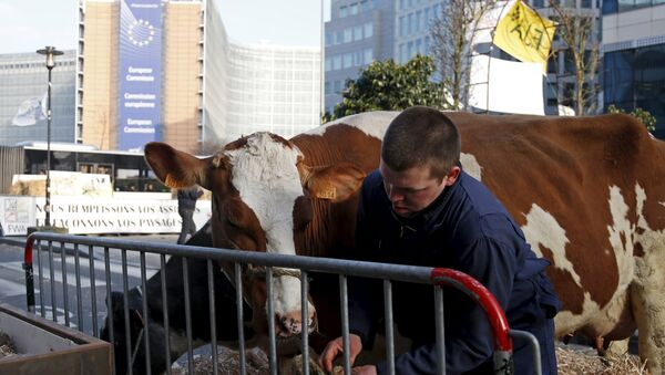 Belgian farmer leads his cow outside the European Union agriculture ministers meeting as farmers protest against low selling prices in central Brussels, Belgium March 14, 2016 - Sputnik International
