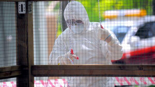 A South Korean quarantine official decontaminates a small aviary, which was hit by bird flu - Sputnik International