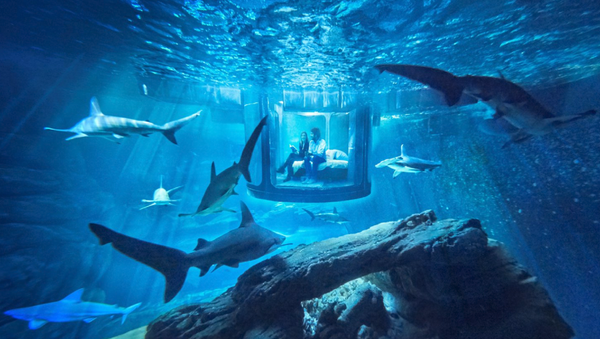 Sleep With the Fishes? You Can, Thanks to the Paris Aquarium and Airbnb! - Sputnik International
