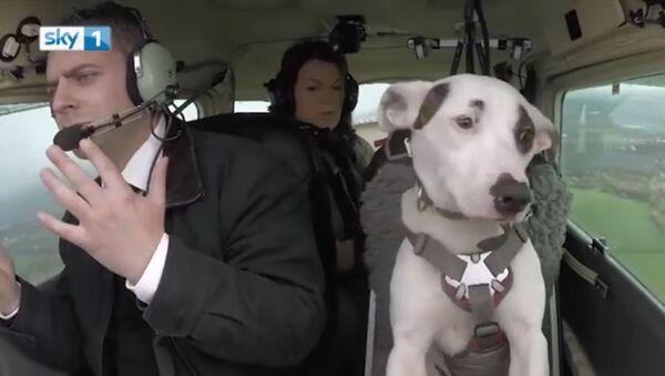 Mark Vette & His Team Teach Dogs To Fly - Sputnik International