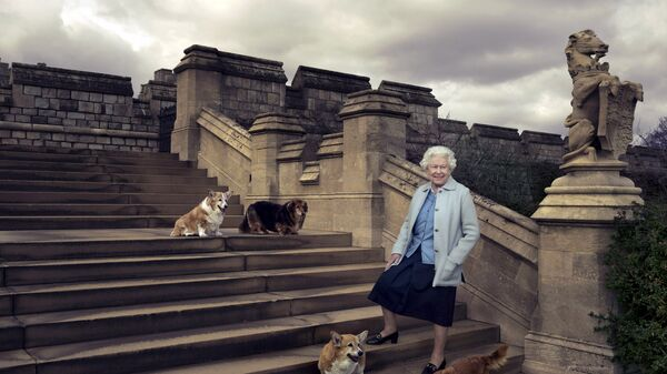 Britain's Queen Elizabeth II is seen walking in the private grounds of Windsor Castle on steps at the rear of the East Terrace and East Garden with four of her dogs. - Sputnik International