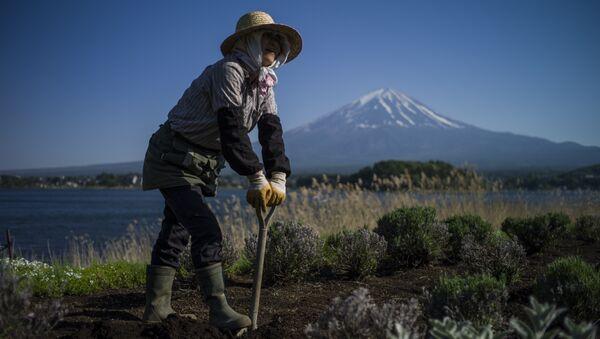 A Japanese gardener works by Kawaguchi Lake overlooking Mount Fuji in Fujikawaguchiko on May 13, 2015 - Sputnik International