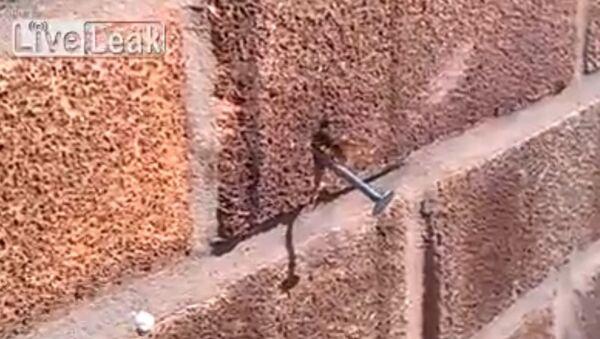 Bee pulls nail from wall - Sputnik International