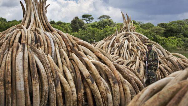Kenya Ivory Burning - Sputnik International