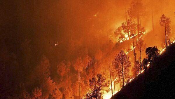 a forest fire - Sputnik International