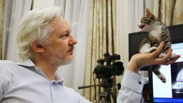 WikiLeaks founder Julian Assange holds up his new kitten at the Ecuadorian Embassy in central London, Britain. (File) - Sputnik International