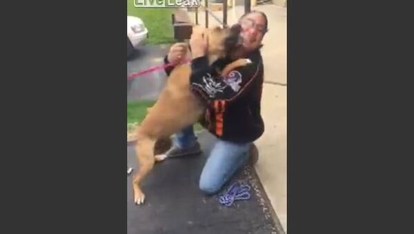Dog is Super Excited to See his Owner After Two Long Years - Sputnik International