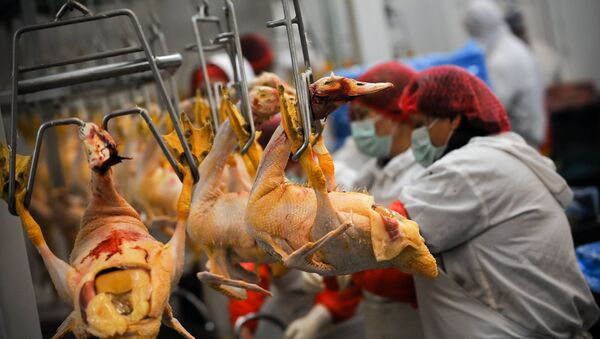 Poultry workers (file) - Sputnik International