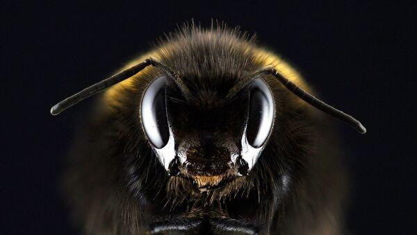 Bee - Sputnik International
