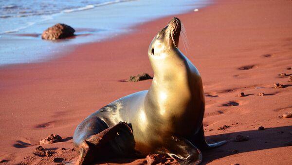 Sea Lion, Galápagos Islands - Sputnik International