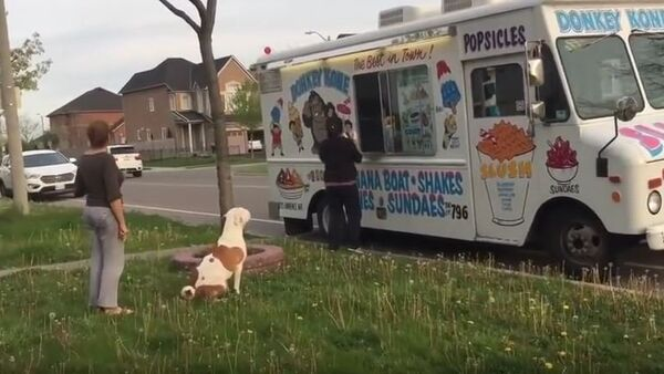 Pit Bull patiently waits in line for ice cream - Sputnik International