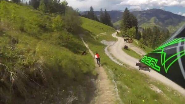 Mountain Biker Almost Crashes into Cow - Sputnik International