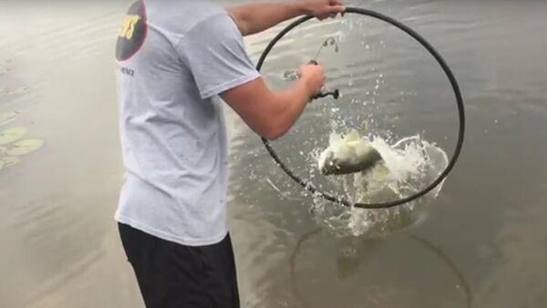 The Fish Whisperer Trains a Bass to Jump Through a Hoop - Sputnik International