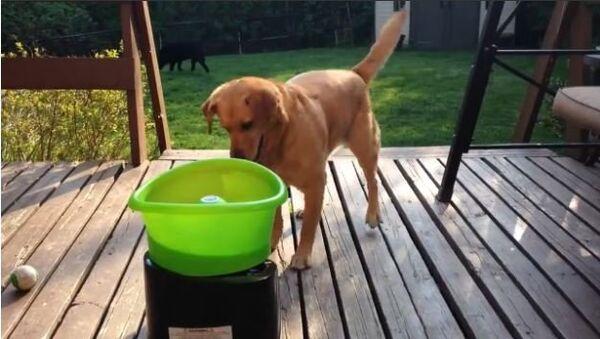 Buddy the Rescue Dog Plays Fetch With His New Toy - Sputnik International