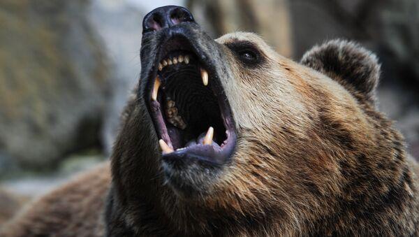 80-Year-Old Russian Headbutts Bear, Survives - Sputnik International