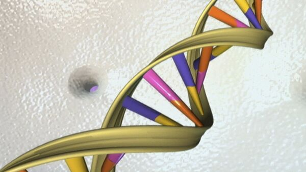 A DNA double helix is seen in an undated artist's illustration released by the National Human Genome Research Institute to Reuters on May 15, 2012 - Sputnik International