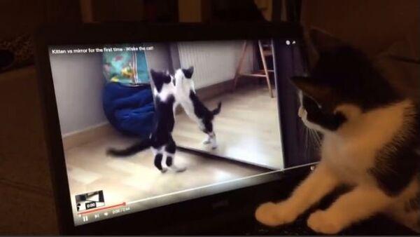 Confused Kitten Watches Video of Herself - Sputnik International