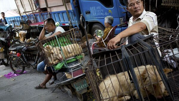 Vendors wait for buyers next to the dogs in cages for sale at a market ahead of a dog meat festival in Yulin in south China's Guangxi Zhuang Autonomous Region - Sputnik International