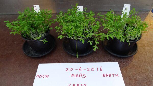 Crops Grown on 'Mars' Soil Safe to Eat - Sputnik International