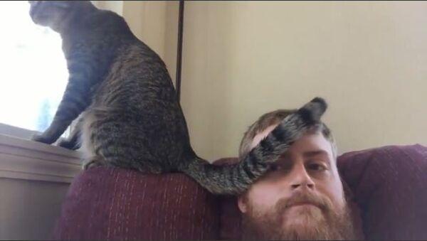 Cat Slaps Tail Across Owner's Face - Sputnik International