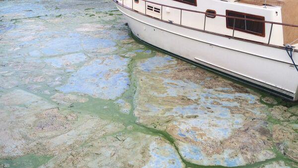 Florida Toxic Algae - July 2016 - Sputnik International