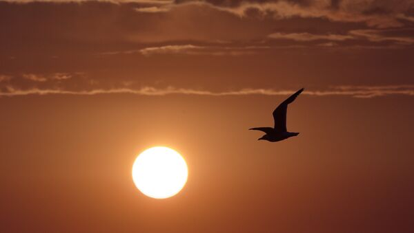 Swan Islands wildfowl nature reserve - Sputnik International
