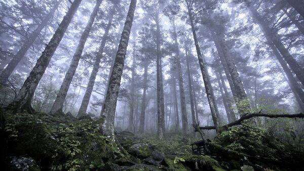 Virgin forest at approx 2500m above sea level, Shennongjia Forestry District - Sputnik International