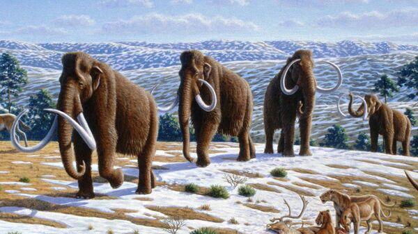 Woolly mammoth  - Sputnik International